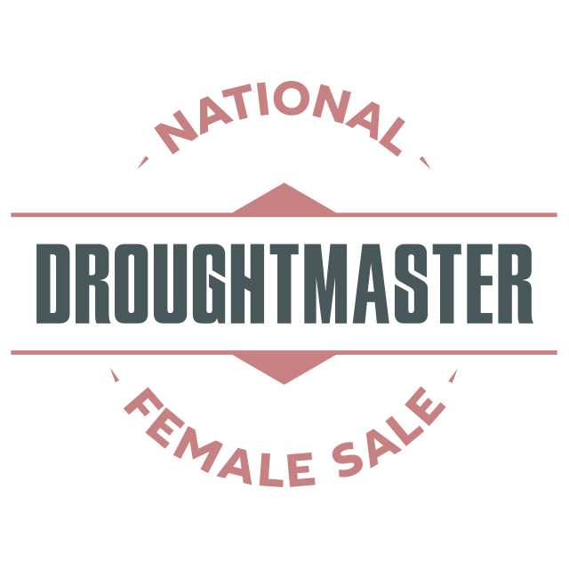 national droughtmaster female sale logo